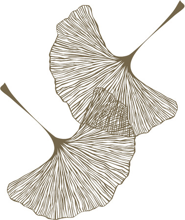 은행 나무 잎