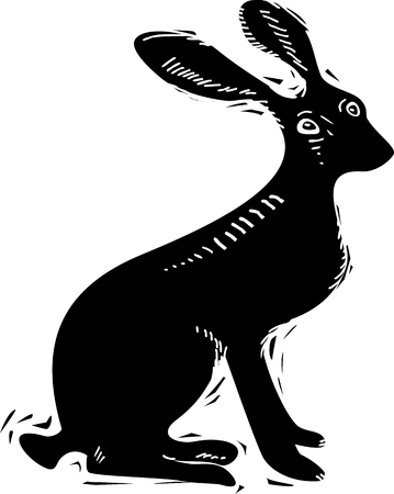 cottontail: Vector illustration of hare