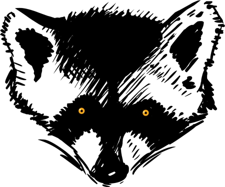 racoon: Raccoon head vector illustration