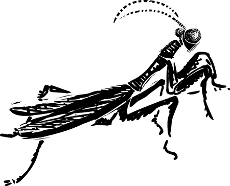 female animal: Vector illustration of praying mantis