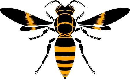 148 yellow jacket bee stock illustrations cliparts and royalty free rh 123rf com yellow jacket clipart free fighting yellow jacket clipart