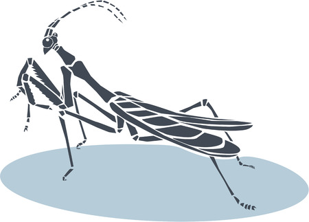 pray: Vector illustration of praying mantis