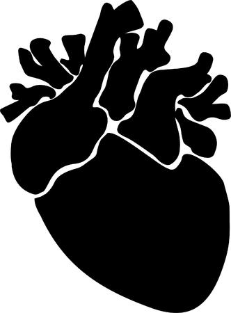 human heart: Ilustración del corazón humano