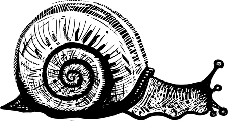 cochlea: Snail vector illustration