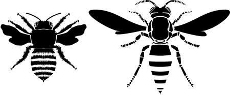 stinging: Bee and wasp vector illustration Illustration