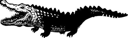 animal mouth: crocodile illustration Illustration