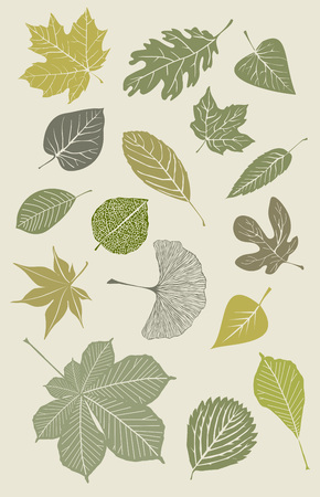 Collection of various leaves