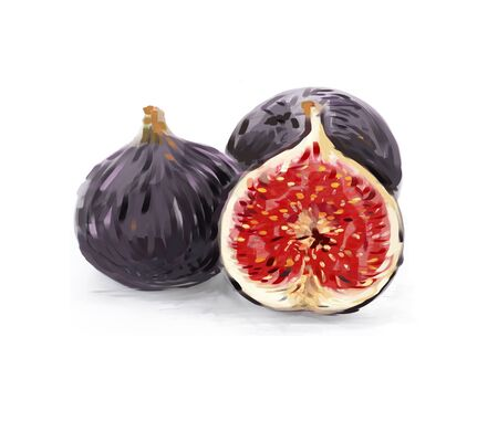 Realistic illustration of fig fruits