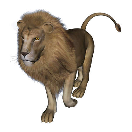 3d lion: 3D digital render of a lion on white background Stock Photo