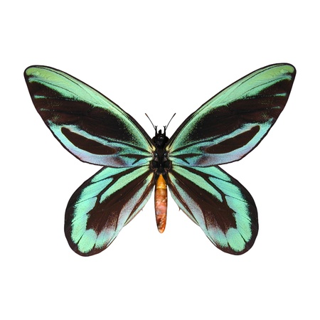 3D digital render of a male Queen Alexandra 版權商用圖片