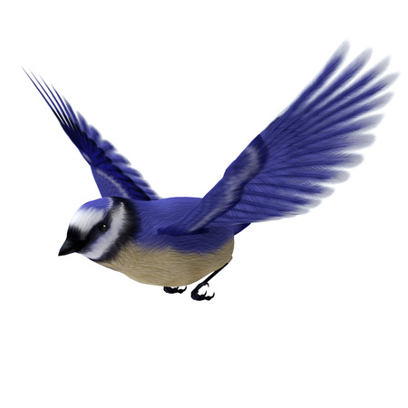 3D digital render of a flying songbird Florida jay isolated on white background