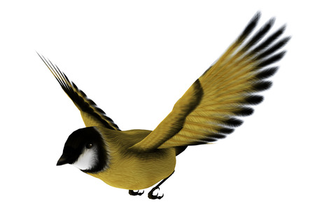 비행 송 버드의 3D 디지털 렌더링 흰색 배경에 고립 된 goldfinch