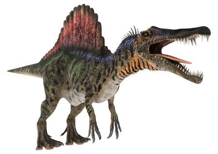 백악기 공룡의 3D 디지털 렌더링 Spinosaurus 또는 가시 도마뱀 흰색 배경에 고립