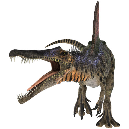3D digital render of an aggressive Cretaceous dinosaur Spinosaurus or spiny lizard isolated on white background