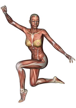 3D digitale render van een vrouwelijke anatomie figuur met spieren kaart geïsoleerd op witte achtergrond Stockfoto