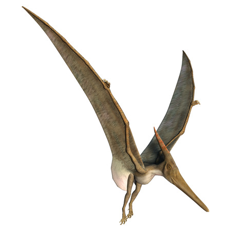3D 디지털 프테라노돈 흰색 배경에 고립 된 선사 시대의 비행 파충류의 렌더링 스톡 콘텐츠