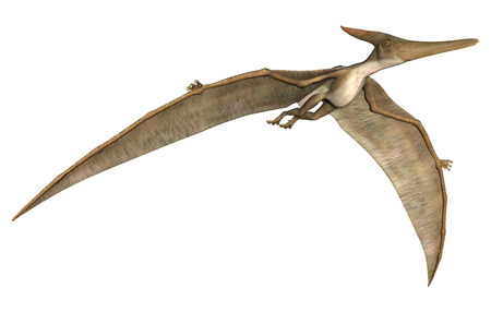 3D digital render of a prehistoric flying reptile Pteranodon isolated on white background