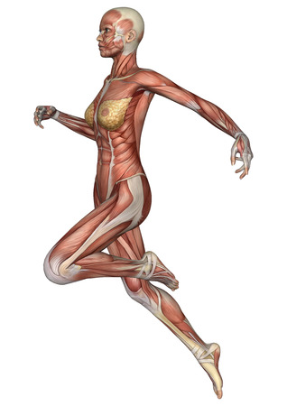 muscular organ: 3D digital render of a running female anatomy figure with muscles map isolated on white background
