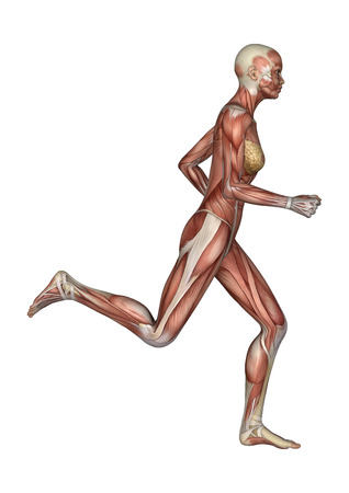3D digital render of a running female anatomy figure with muscles map isolated on white background