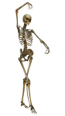 Digitale 3D-Darstellung von einem alten menschlichen Skeletts auf weißem Hintergrund Standard-Bild - 32515445