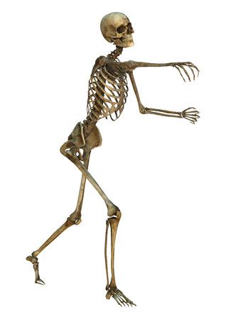 3D Digitale Darstellung Von Einem Alten Menschlichen Skeletts ...