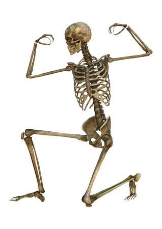 3D digital render of an exercising old human skeleton isolated on white background Standard-Bild