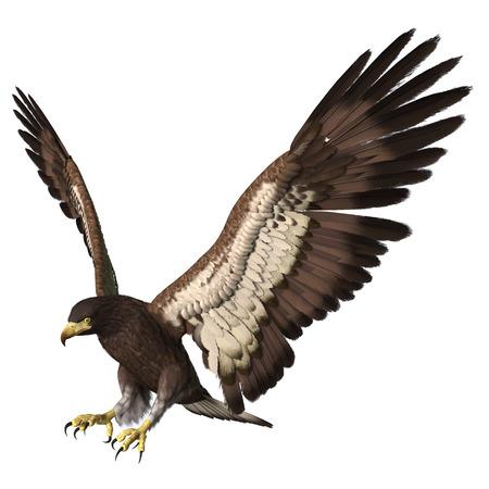 Digital En 3D Render De Un águila Calva De Aterrizaje Aislada En El ...