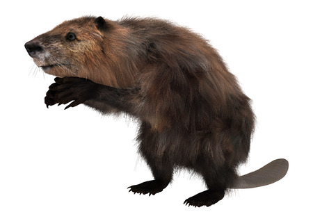 3D digital render of a cute beaver isolated on white background Imagens