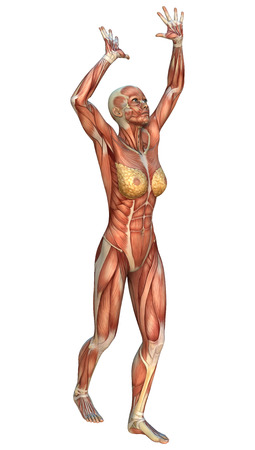 3D digital render of a female figure with muscle maps playing volleyball isolated on white background