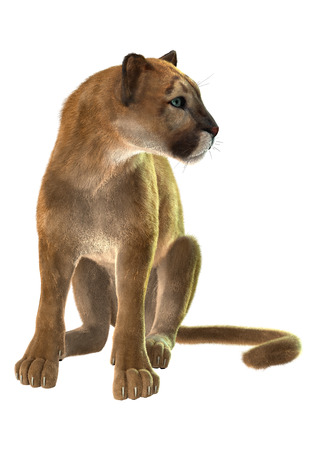 3D digital render of a sitting puma, known as a cougar, mountain lion, or catamount, isolated on white background