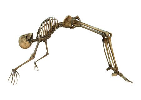 Digitale 3D-Darstellung von einem alten menschlichen Skeletts Ausübung isoliert auf weißem Hintergrund Standard-Bild - 35371912