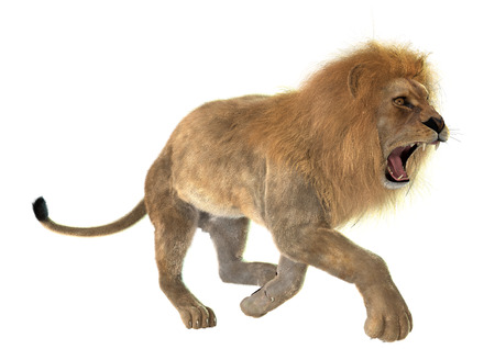 3D digital render of an angry running male lion isolated on white background