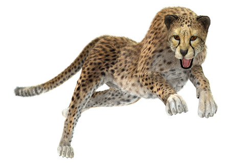 3D digital render of a hunting cheetah isolated on white background