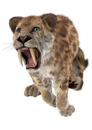3D digitaal maken van een springende agressieve smilodon of een sabel getande kat geïsoleerd op een witte achtergrond