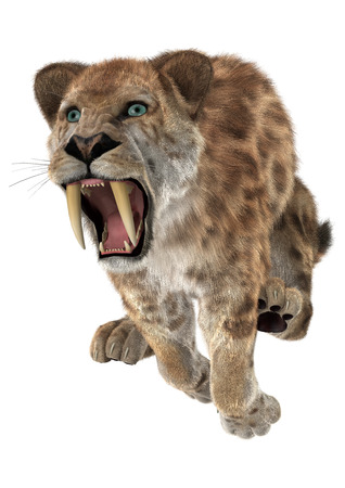 3D digital render of a jumping aggressive smilodon or a saber toothed cat isolated on white background