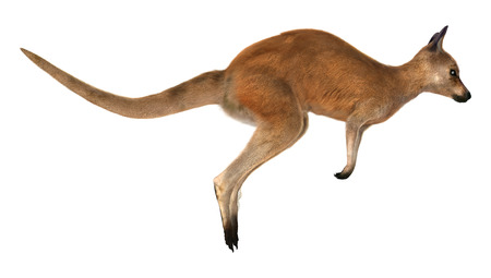 3D digital render of a jumping red kangaroo isolated on white background Stock Photo