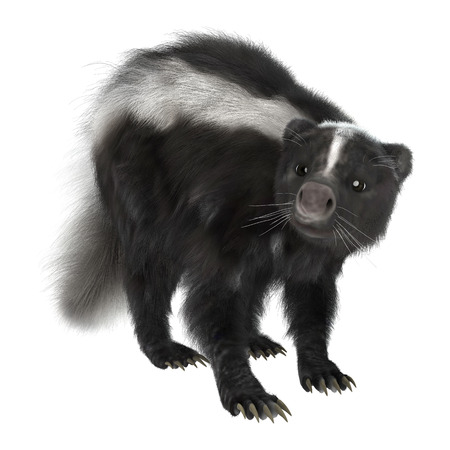 3D digital render of a skunk isolated on white background