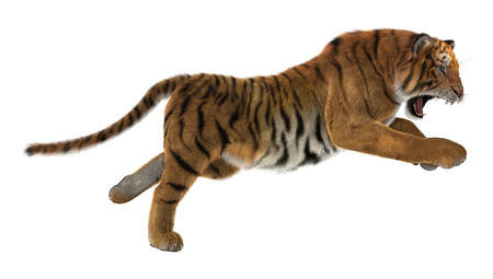 3D digital render of a hunting big cat tiger isolated on white background Imagens