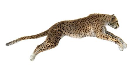 3D 디지털 흰색 배경에 고립 점프 치타의 렌더링