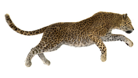 3D digital render of a jumping leopard isolated on white background