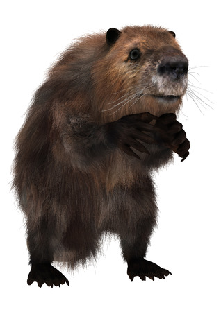 3d digital render of a cute beaver isolated on white