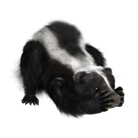 3D digital render of a funny skunk isolated on white background