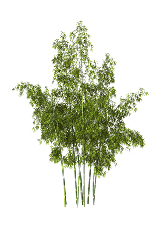 3D digital render of greeen bamboo trees isolated on white background