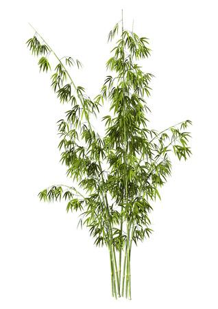 Digitale 3D rendering di greeen alberi di bambù isolato su sfondo bianco Archivio Fotografico - 40046140