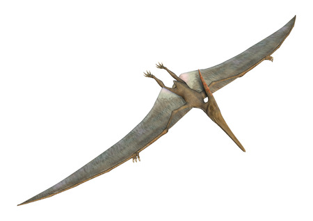 3D digital render of a Pteranodon flying isolated on white background