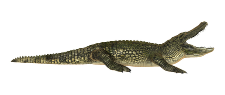 3D digital render of a American alligator isolated on white background