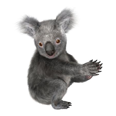 Digital 3D render de un koala lindo aislado en el fondo blanco Foto de archivo - 46370252