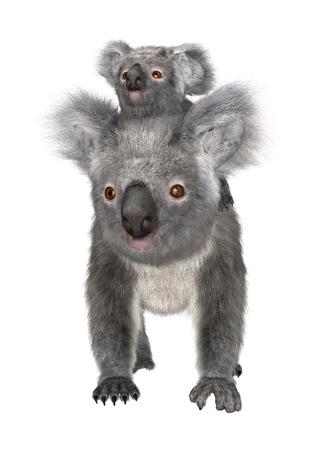 3D digitaal maken van een leuke Australische koala dragende baby op een witte achtergrond Stockfoto