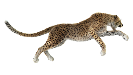 3D digital render of a big cat cheetah hunting isolated on white background