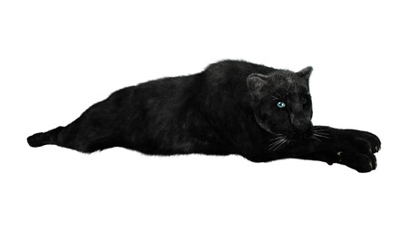 3D digital render of a big cat black panther resting isolated on white background
